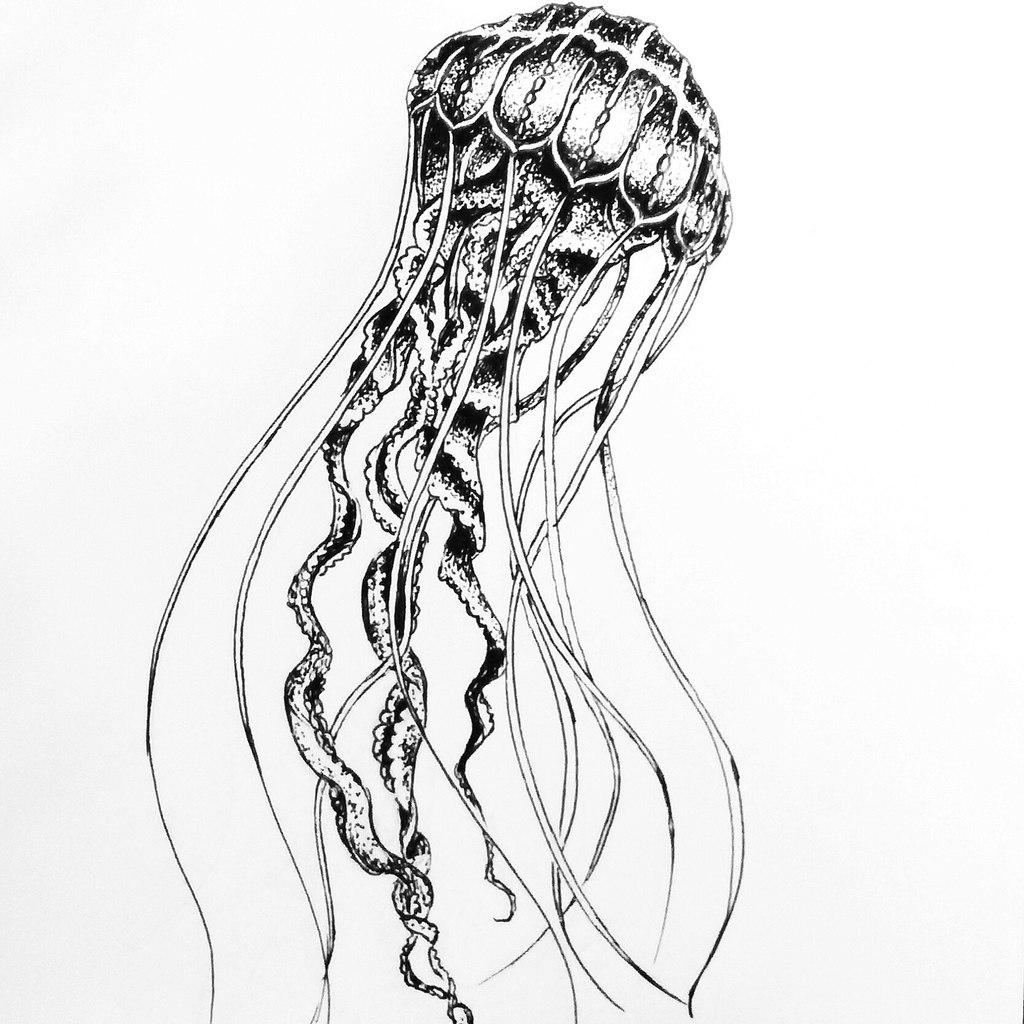 It's just a graphic of Simplicity Jellyfish Line Drawing