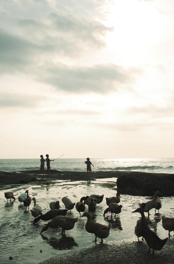Bebek Laut by paulussebastian