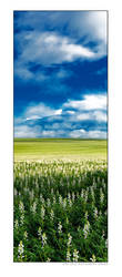 Blue Sky Fields by Furiousxr