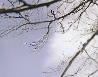 Winter Branches by aeoleo