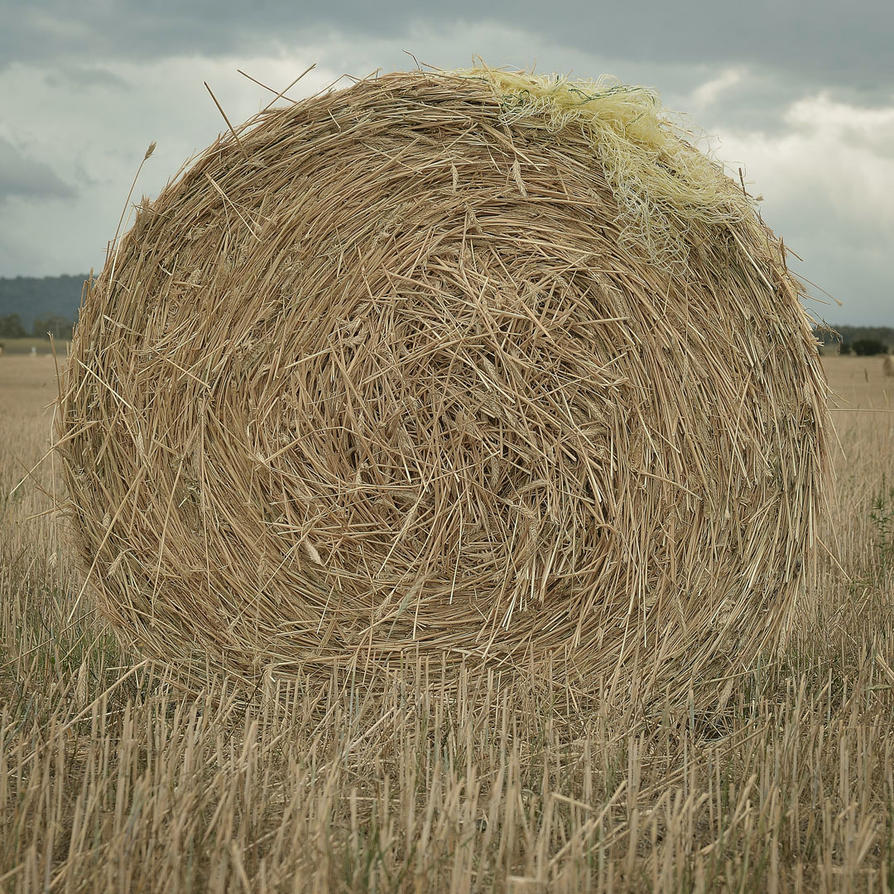 Baled Hay by Rhyton