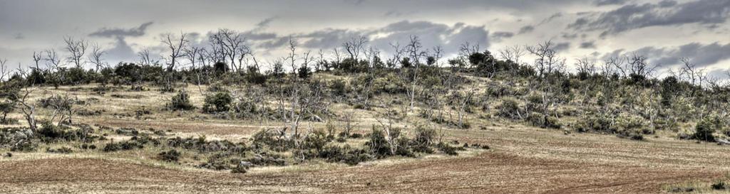 Dead Trees by Rhyton