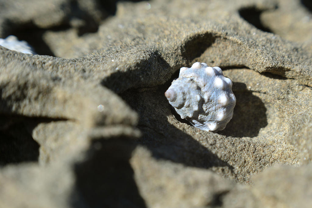 Shell by Rhyton