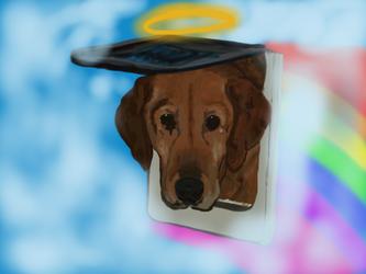 Knocking on Heavens doggie door by BellaLyle