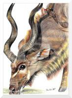 Drink Up Kudu by Devil-Wolf-1999