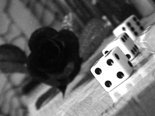 Rose + Dice in Black and White by Anne-Locke