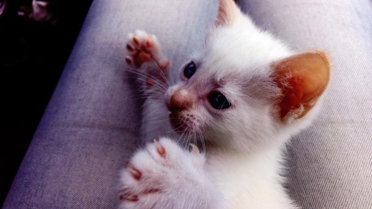 nice Kitten by ToshatheDog