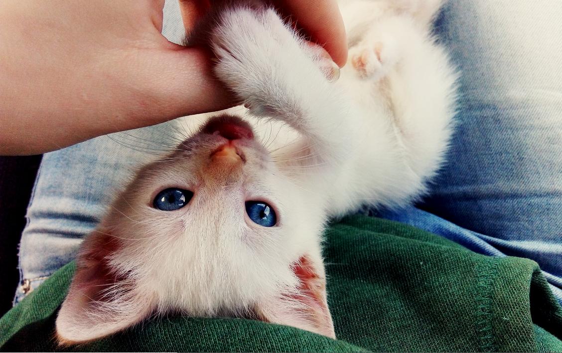 Mary - my kitten by ToshatheDog
