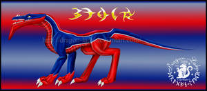 Blue-Red Beau Dragon