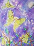 Luna Moth Dance
