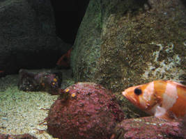 Two Sad Nemos