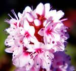 flower stalk I