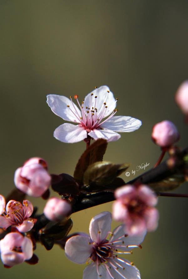 Cherry Stick by Niophee