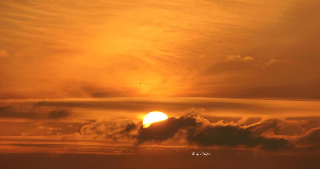 Golden Sunrise II by Niophee