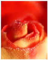 Pearls of Rose by Niophee