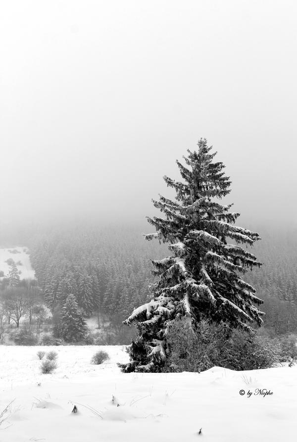 Winter Treem by Niophee