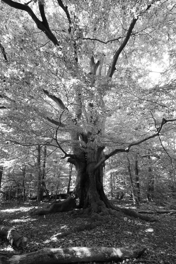 Grace of Forest II by Niophee