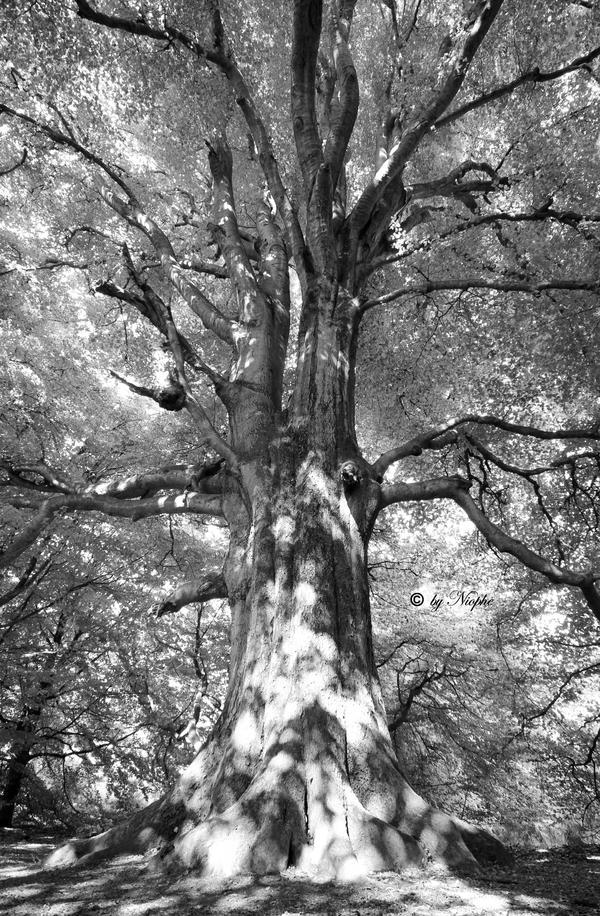 Grace of Forest III by Niophee