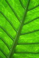green pulse by Niophee