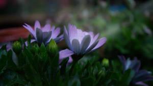 Flower in the morning