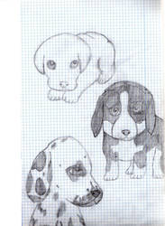 Cute dogs by geminis12
