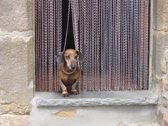 Through dog's eyes by geminis12