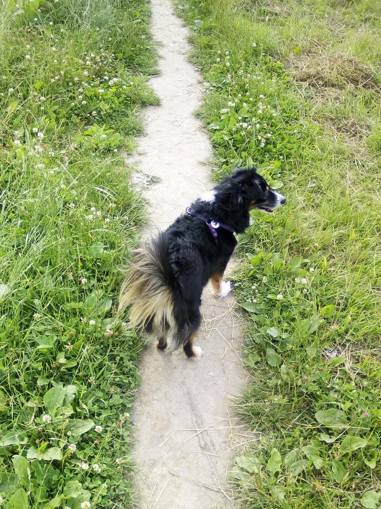 Frida na spacerze by JAS39