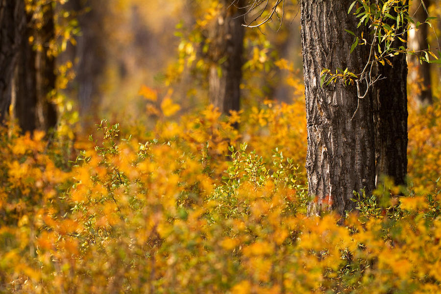 Autumn Morning by StevenDavisPhoto