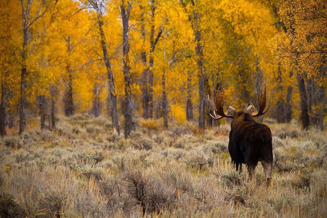 The Yellow Wood by StevenDavisPhoto