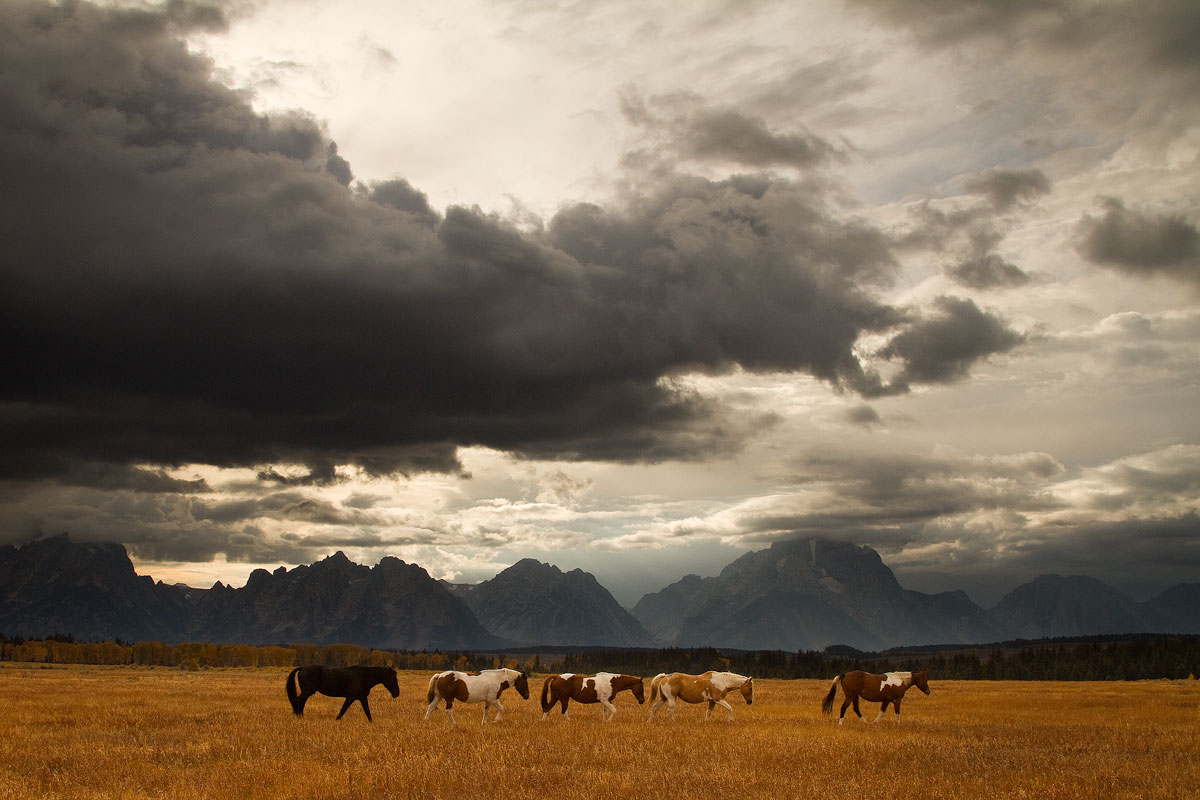 Horses and Tetons by StevenDavisPhoto