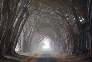 Cypress Tunnel by StevenDavisPhoto