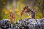 Squirrel (#25) by StevenDavisPhoto