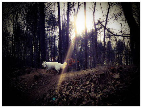 My lovely dog in the forest