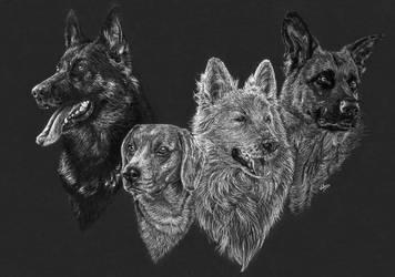 3 shepherds and a beagle by Jelena131