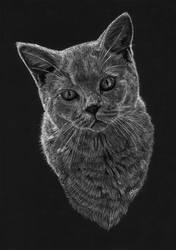 Grey cat by Jelena131