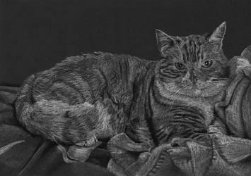 Cat on blanket by Jelena131