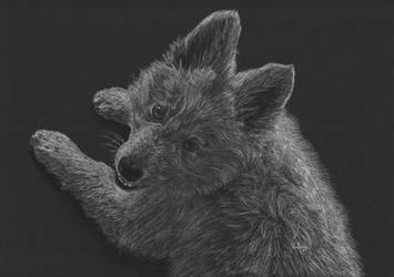Swiss Shepherd pup