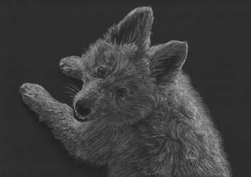 Swiss Shepherd pup by Jelena131