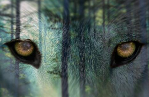 A Beast's Eyes by AnEnigmaISaMystery