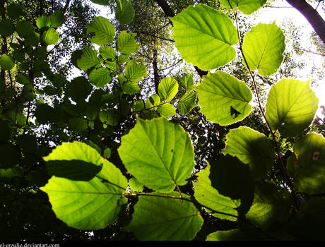 Greeness 2
