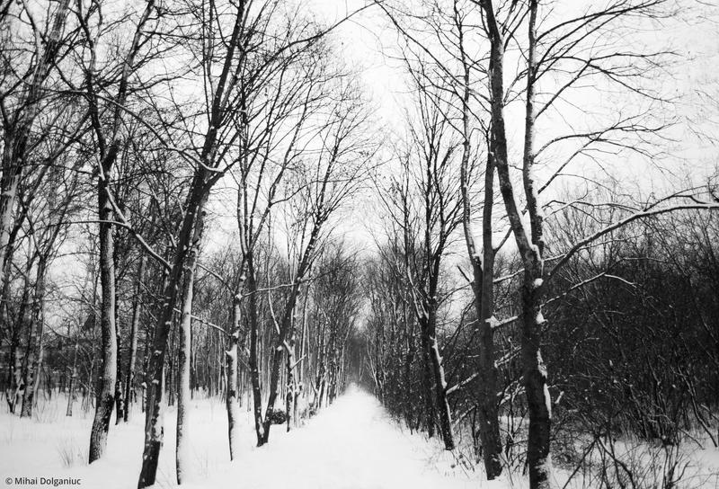 Winter 2015 by mishulika007