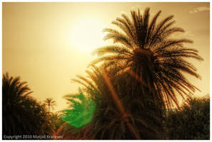 Palmrise by karstART