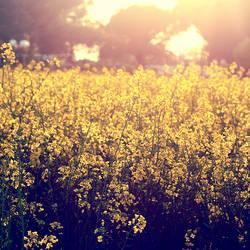 primavera by Verlasse