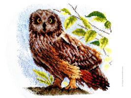 Owl) by Alik-Volga