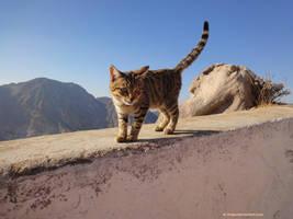 Cat. by Alik-Volga