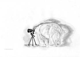 Arctic photographer).