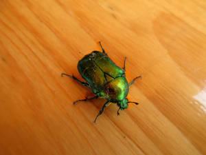 Green).