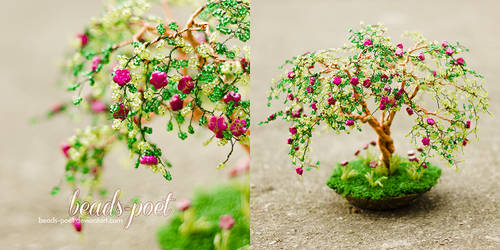 Blosson tree