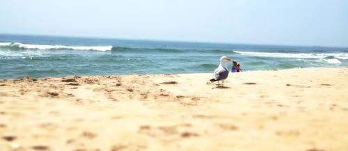 Jersey Seagull