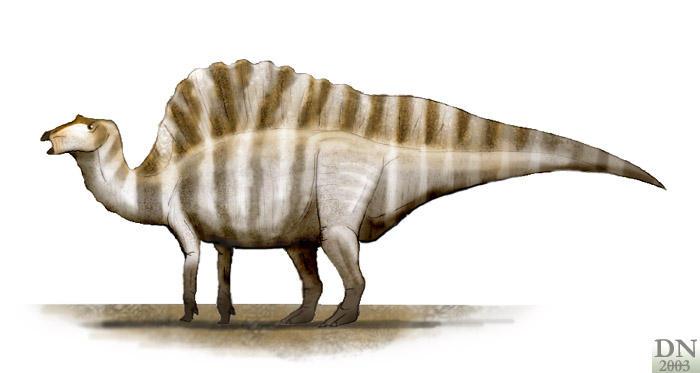 ... STUDIES OF SOUTH CAROLINA | Ouranosaurus Information Sheet